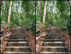 Hutan Lipur Kanching | HDR #74 3D Stereography (AnNamir c[_]) Tags: 3d stereograph stereography aon hdr selangor tangga kanching annamir muktasyaf annamirphotography aongo aongo2014 tangga3d 3dmalaysia