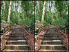 Hutan Lipur Kanching   HDR #74 3D Stereography (AnNamir™ c[_]) Tags: 3d stereograph stereography aon hdr selangor tangga kanching annamir muktasyaf annamirphotography aongo aongo2014 tangga3d 3dmalaysia
