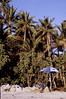 Turtle Island, Fiji (sainsburychristopher) Tags: eyeofthewind tikopia operationdrake