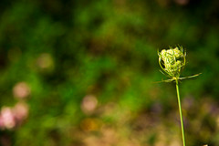 lonely (Mido Melebari) Tags: life summer plants plant canada macro green canon spring alone natural live guelph iso strong 5d lonely