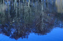Reflections (Karen_Gourlay) Tags: reflections tranquility gi roundhaypark 2013