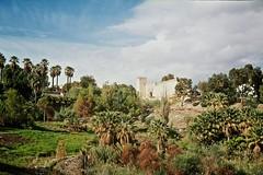 Fez, Morocco (Nick Chesnaye) Tags: 35mm morocco fez yashica