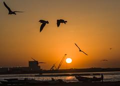 Smile. It's morning.   (haidarism (Ahmed Alhaidari)) Tags: morning sea sun nature birds sunrise work harbor boat early good