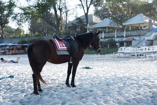 Standing beach horse