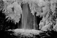 """gelide ... decorazioni ("""" paolo ammannati """") Tags: forest 1001nights acqua foresta cascata vallombrosa paoloammannati ghaccio"""
