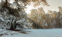 Good morning sunshine (Kees Waterlander) Tags: winter snow sneeuw nederland thenetherlands drenthe dwingeloo