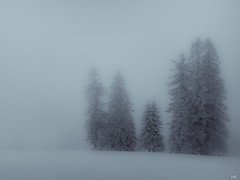 Winter (*altglas*) Tags: schnee trees winter bw snow fog forest ir soft nebel infrared toned bume whiteout infrarot schneefall winterwald