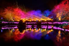 DSC_6558~1 ~ .... - Formosan Aboriginal Culture Village -Nantou - Taiwan (michaeliao27) Tags: show light music lake village culture taiwan laser sakura aboriginal  nantou   formosan   ~
