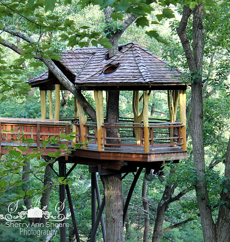 Dunmore (PA) United States  city pictures gallery : Tree House Nay Aug Park Scranton, Pennsylvania by sasphotography570