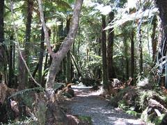 Rainforest of New Zealand
