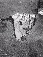 quotidiano al rovescio (eleonor73) Tags: city reflection puddle blackwhite streetlight bn sidewalk insideout biancoenero lampione citt riflesso marciapiede pozzanghera rovescio