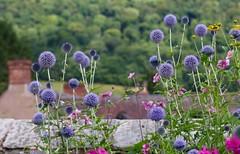 Gardens at Stokesay (Kez West) Tags: shropshire stokesay castle gardens flowers summer purple englishheritage