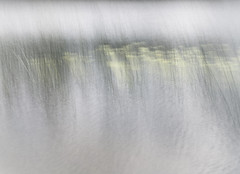 Waterlilies (kate stringer) Tags: wales