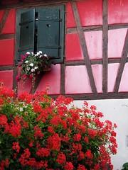 Maison rouge  Kintzheim ( Alsace ) (Gilles Daligand) Tags: alsace kintzheim maison colombages murs walls rouge red fleurs flowers parterredefleurs plante exterieur