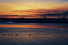 13987OC (David Swift Photography Thanks for 16 million view) Tags: davidswiftphotography newjersey oceancity sunset ducks bayshore bay blengland water sky 35mm film kodakektar100 olympusstylusepic