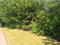 2016_07_190001 (Gwydion M. Williams) Tags: coventry britain greatbritain uk england warwickshire westmidlands