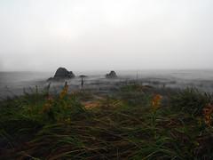 The eternal fight (dieies) Tags: eternal water vegetation riverside river olympus zuiko omd em1 fight olympus1240mmf28