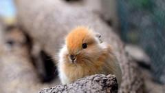 Conejitooo (EXPLORE) (PAULAPGS) Tags: rabbit conejo animal granja farm