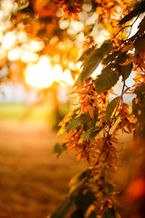 Autumn Mood (thethomsn) Tags: autumn mood fall leaves tree wood focus dof bokeh backlight golden nature park outdoors germany sigma30mm14 thethomsn beautyinnature change season flare branch detail