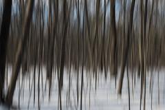 Oka (Sbastien Cocquet) Tags: oka qubec winter tree blur