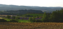 Lavender Field (AmyEAnderson) Tags: lavender purple countryside bucolic provence luberon france europe farm flowers