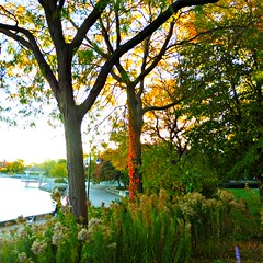 """""""I'm so glad I live in a world where there are Octobers.   L.M. Montgomery, Anne of Green Gables (Trinimusic2008 - stay blessed) Tags: trinimusic2008 judymeikle nature trees light bushes lakeontario neighbourhood promenade walk toronto to ontario canada"""