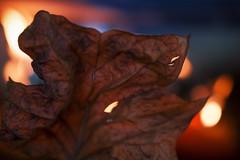 Flickrfriday : Feuilles d'automne - Autumn leaves (Studio de graphisme) Tags: backlit leaves leaf autumn bokeh blue orange yellow contrejour feuille feuilles automne mortes dead bleu jaune fire feu hole trou dautomne autumnleaves flickrfriday macro mondays macromondays nature