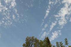 Ψίνθος (Psinthos.Net) Tags: ψίνθοσ psinthos october autumn φθινόπωρο οκτώβρησ φύση countryside sunnyday ηλιόλουστημέρα μέρα day light φώσ bluesky γαλάζιοσουρανόσ σύννεφα νέφη clouds αεροπλάνο airplane airtale ουράαεροπλάνου trees δέντρα