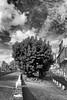 arbore (amargureiro) Tags: tree trees city cityscape oldtown palmademallorca palma blackandwhite bw blancoynegro black white sky urban d80 light contrast 1870mmf3545