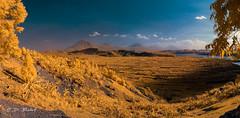 Uganda in Gold (David Baterip) Tags: travel volcano gold fields infrared photography uganda africa landsape 590nm near mountains rwanda congo volcanic virunga lake mutunda lakemutunda eastafrica centralafrica d80 nearinfrared irphotography ir