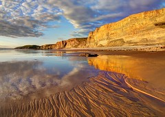 Lost in the trees (pauldunn52) Tags: traeth mawr wet sand reflections witches point glamorgan heritage coast wales sunset