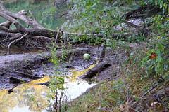 DSC06654 (Capt Kodak) Tags: autumn chattahoocheerivernationalrecreationarea fall medlockbridgepark nationalparkservice trash watermellon