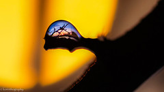 small world backlit HMM (korinthography ~sometimes off~) Tags: macromonday backlit macro a7 sony sunset waterdrop
