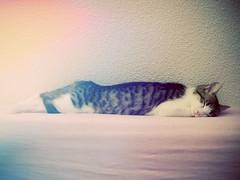 Clochette (sOoZ__) Tags: cat photo chat photographie picture minette clochette chatoune