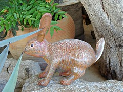 Conejo (knightbefore_99) Tags: wild art nature fauna mexico airport pacific conejo south sunny mexican help oaxaca tropical huatulco conserve