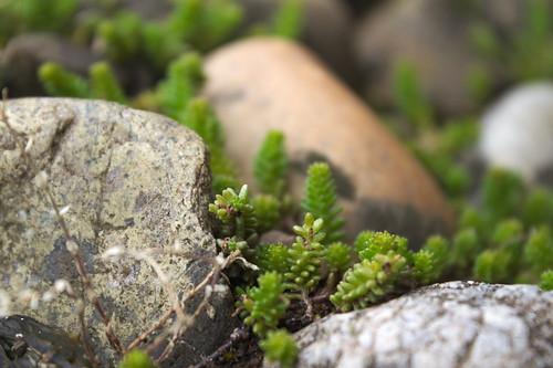 Plants and Stones   Pflanzen und Steine