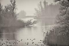 on a foggy morning (robvanderwaal) Tags: trees winter bw mist tree nature water netherlands fog creek blackwhite bomen zwartwit foggy nederland natuur boom biesbosch zw 2014 kreek rvdwaal robvanderwaalphotographycom
