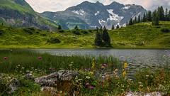 Vorarlberg Österreich (b.stanni) Tags: summer mountains nature landscape austria see österreich sommer natur blumen berge landschaft vorarlberg