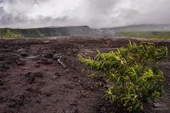 La vie dans le Chaos (Thibaud Chanfray) Tags: nature reunion island ngc ile des route réunion lave île sauvage laves