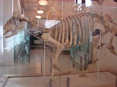Museu de Histria Natural (Fernando Bryan Frizzarin) Tags: new york usa history nova museum museu natural eua histria iorque