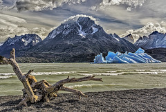 Punta Buenos Aires and Lago Grey (Daniel Schwabe) Tags: chile wood patagonia mountain lake snow beach wind iceberg