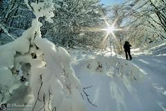 La sposa (EmozionInUnClick - l'Avventuriero's photos) Tags: neve sole bosco sibillini faggeta valcanatra