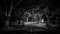 kitchener (ianzmackie) Tags: street bw tree night dark time hamilton eerie midnight nz d5200