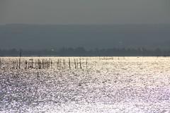 2 (Yorozuna / ) Tags: lake reflection japan shiga fishery  biwako riffle watersurface  makino   takashima lakebiwa      fishingindustry     lakesurface       kaidu    kaiduosaki