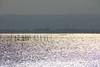 えりのかげ 2 (萬名 游鯏(ヨロズナ) / Yorozuna) Tags: lake reflection japan shiga fishery 漁 biwako riffle watersurface 湖 makino 小波 琵琶湖 takashima lakebiwa びわ湖 水面 反射 滋賀県 湖面 fishingindustry さざなみ 漁業 えり 海津 lakesurface 反射光 海津大崎 さざ波 高島市 漣 エリ kaidu マキノ町 細波 エリ漁 kaiduosaki えり漁業 えり漁 エリ漁業