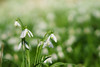 ILCE-6000_2015067_DSC03890 (Sicong (OFF for a while)) Tags: flower sony a6000 sal135f18za