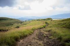 grassy highland