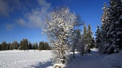 Correnon en Vercors (digo38) Tags: montagne neige vercors isre