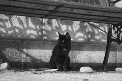 Dia (tiki.thing) Tags: shadow cat blackcat