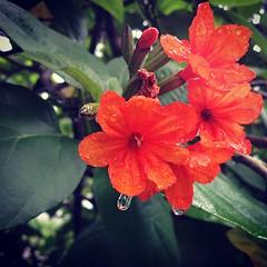 แด่เธอ ผู้เป็นดั่งดอกไม้งาม ถึงวันนี้ร่วงโรยไปตามกาลเวลา แต่ดอกไม้ดอกนี้จะบานอยู่ในใจเราตลอดกาล